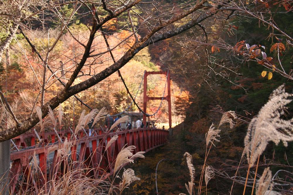 misakubo-season-autumn02